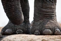 Elefante en Waterhole foto de archivo