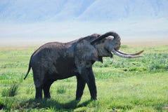 Elefante en yermo Fotos de archivo libres de regalías