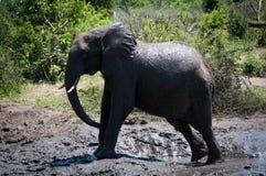 Elefante in fango Fotografia Stock Libera da Diritti