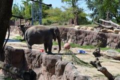 Elefante felice Fotografia Stock Libera da Diritti