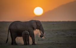 Elefante femenino con el joven en la puesta del sol en el parque nacional de Amboseli Fotografía de archivo