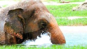 Elefante femminile in acqua fotografia stock libera da diritti