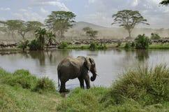 Elefante in fiume nella sosta nazionale di Serengeti Fotografia Stock Libera da Diritti
