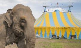 Elefante fuori del circo Immagini Stock