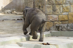 Elefante in gabbia Immagine Stock Libera da Diritti