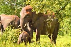 Elefante grande con un elefante del bebé Imágenes de archivo libres de regalías