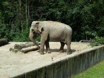 Elefante grande en parque Imágenes de archivo libres de regalías