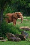 Elefante grande no fundo da floresta foto de stock royalty free