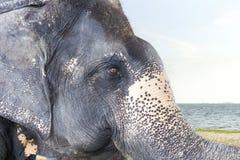 Elefante grande saudável de Ásia na praia no dia brilhante fotos de stock
