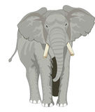 Elefante, illustrazione Fotografia Stock Libera da Diritti