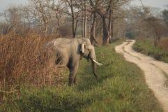 Elefante indiano Fotografie Stock Libere da Diritti