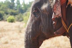 Elefante indiano Fotografia de Stock Royalty Free