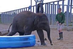 Elefante indiano del bambino e custode di zoo Fotografie Stock