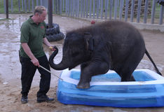 Elefante indiano e custode del bambino Immagine Stock