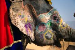 Elefante indiano em uma coloração festiva Imagem de Stock