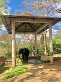 Elefante indiano no konni Kerala foto de stock royalty free
