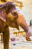 Elefante indiano santo in Hampi, India Immagine Stock Libera da Diritti