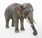 Elefante indio contra un fondo blanco ilustración del vector
