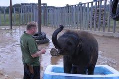 Elefante indio del bebé y encargado de parque zoológico Imagenes de archivo