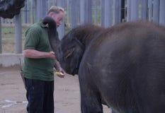 Elefante indio y encargado del bebé Foto de archivo libre de regalías