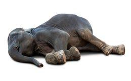 Elefante inoperante isolado fotos de stock