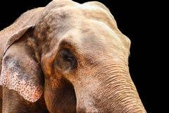 Elefante isolado no fundo preto imagens de stock