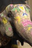 Elefante, Jaipur, India Immagini Stock Libere da Diritti