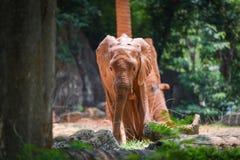 Elefante joven en parque nacional - elefante de África con fango en piel imagenes de archivo