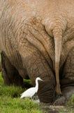 Elefante la roca Imágenes de archivo libres de regalías