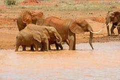 Elefante in lago Parco nazionale del Kenya Fotografie Stock