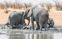 Elefante Mudbath 4 del bebé fotografía de archivo libre de regalías