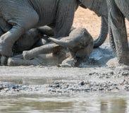 Elefante Mudbath 6 del bebé fotos de archivo