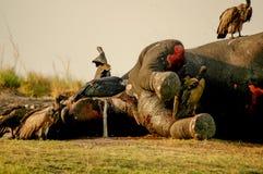 Elefante muerto Imágenes de archivo libres de regalías