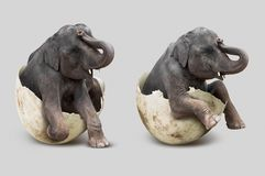 Elefante na casca de ovo fotografia de stock royalty free