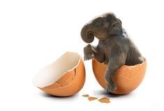 Elefante na casca de ovo imagem de stock royalty free