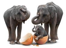 Elefante na casca de ovo e família imagem de stock