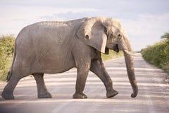 Elefante na estrada em África Imagem de Stock
