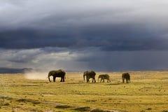 Elefante na luz do sol fotografia de stock royalty free