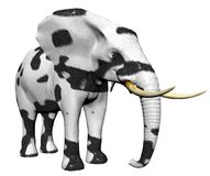 Elefante na pele do gato grande Foto de Stock