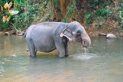 Elefante na reserva em Sri Lanka Fotografia de Stock Royalty Free
