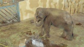 Elefante nel giardino zoologico archivi video