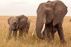Elefante nel Kenia Fotografia Stock
