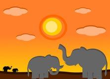 Elefante nel tramonto Immagine Stock Libera da Diritti