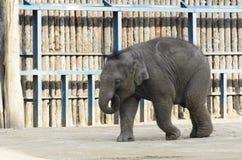 Elefante nella recinzione Fotografia Stock Libera da Diritti