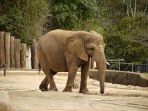 Elefante nella sua penna. Fotografia Stock