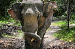 Elefante no console tailandês Foto de Stock