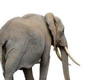 Elefante no fundo branco Imagem de Stock