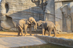 Elefante no jardim zoológico de Everland fotos de stock royalty free