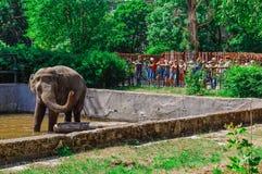 Elefante no jardim zoológico de Kaliningrad Imagem de Stock Royalty Free