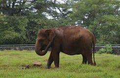 Elefante no jardim zoológico de Ragunan, Jakarta, Indonésia Fotos de Stock